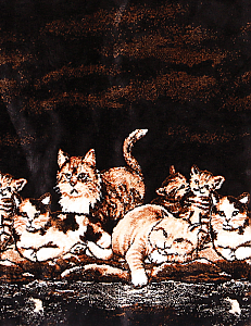 Cats Kitten Nights Meow Double Ply Plush Fleece Print Blanket by Bear Ridge Outfitters